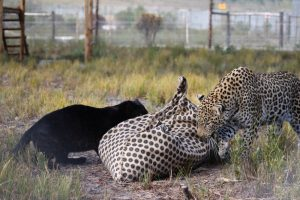 Enrichment Program & Team Building | Panthera Africa