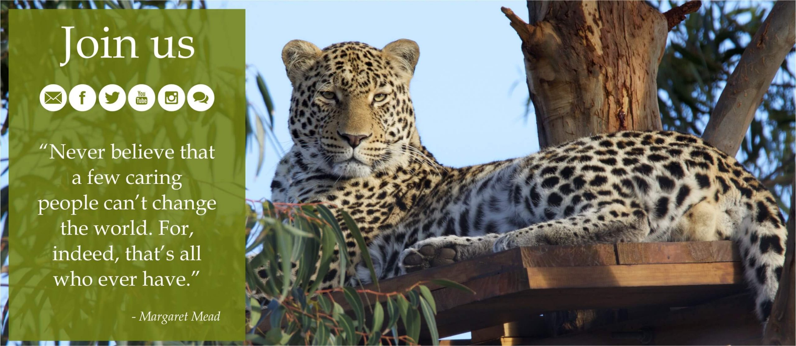 panthera-africa-join-us