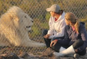 panthera-africa-animal-communication