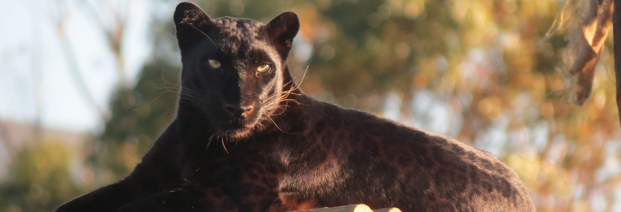 panthera-africa-motivational-talks
