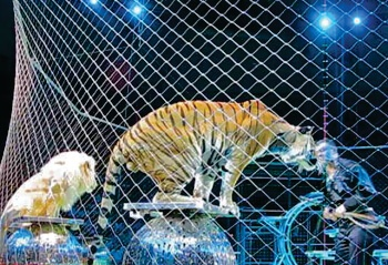 animals-in-circuses